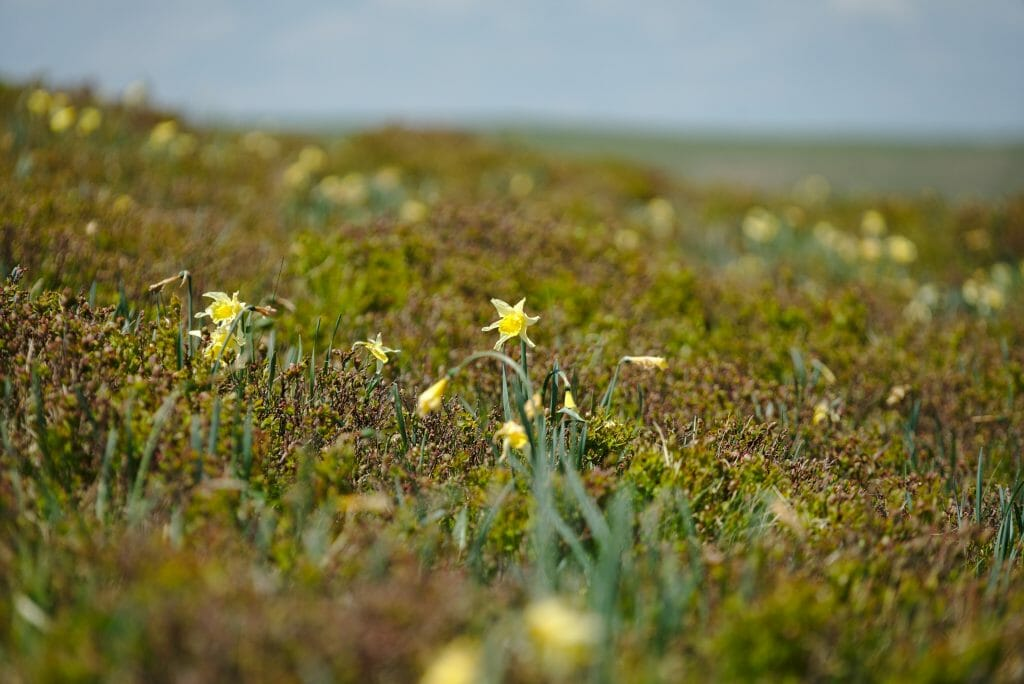 randonnée fleurie auvergne