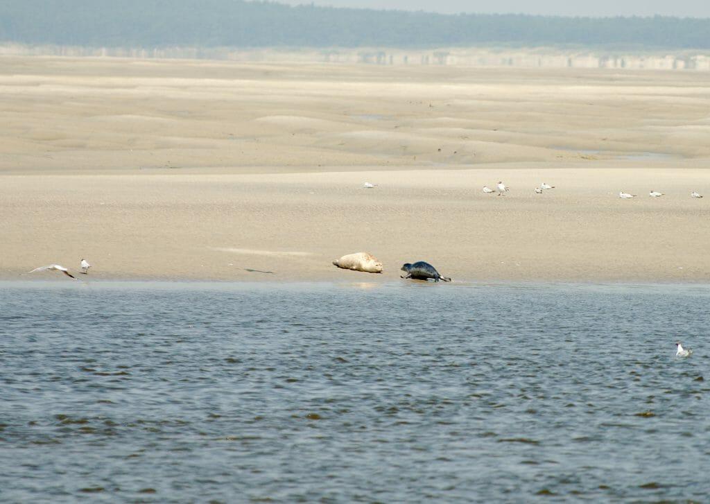 les phoques sur la plage