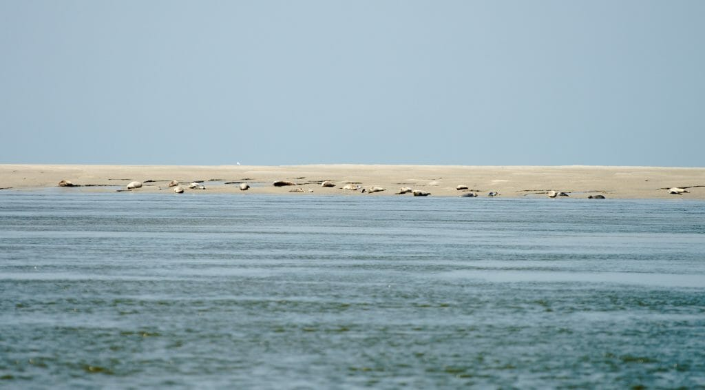 seals, point du hourdel