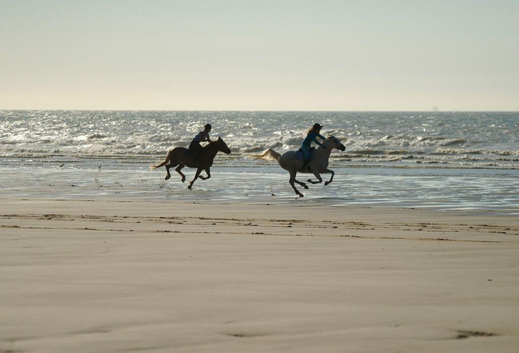 chevaux sangatte
