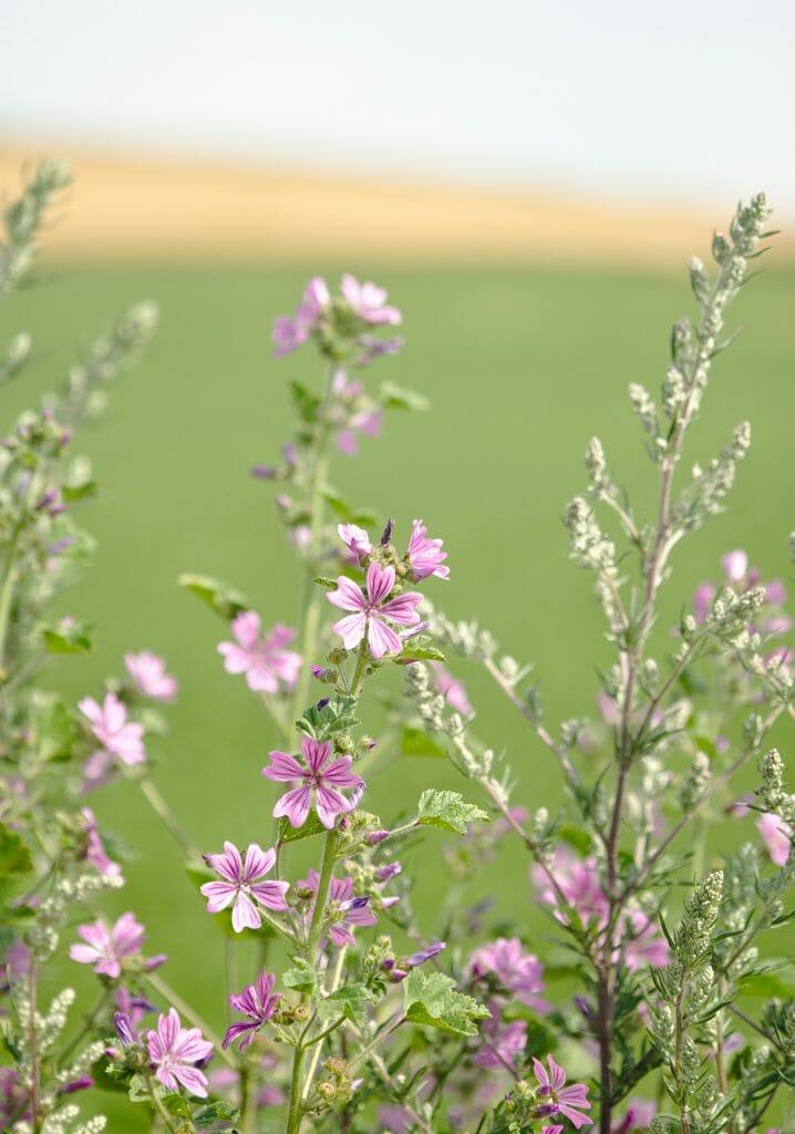 fleur dans le nord de la france