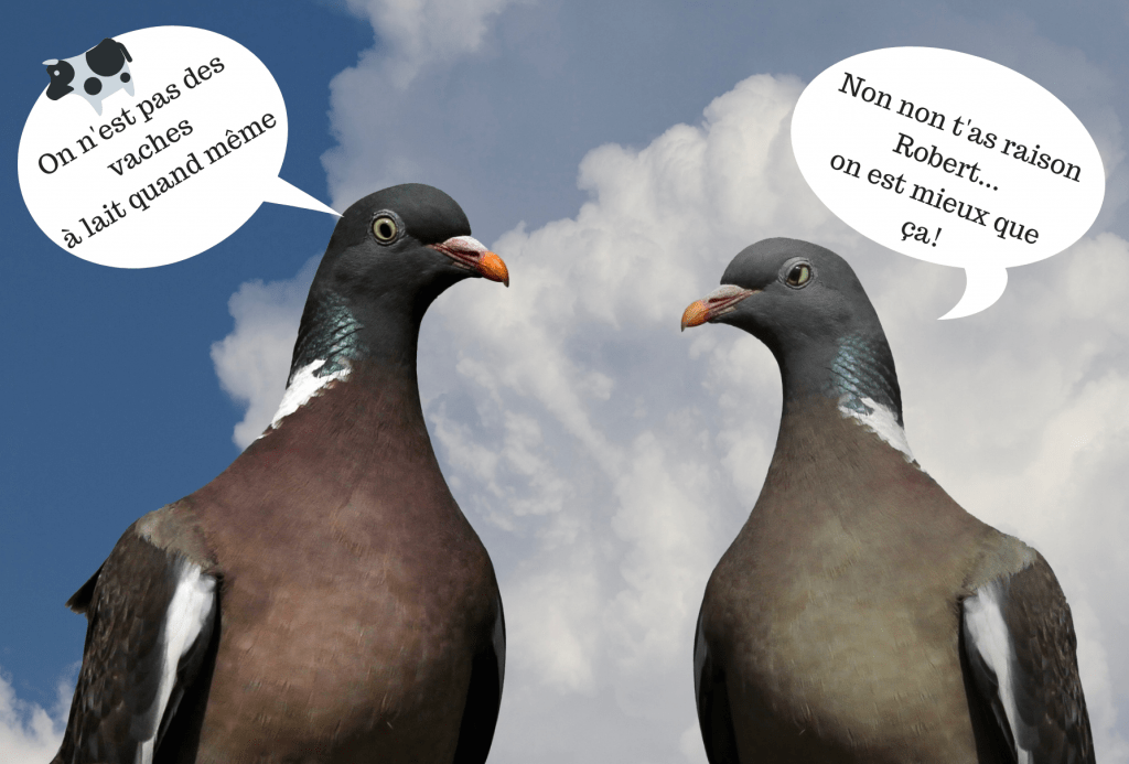 banque suisse pigeon