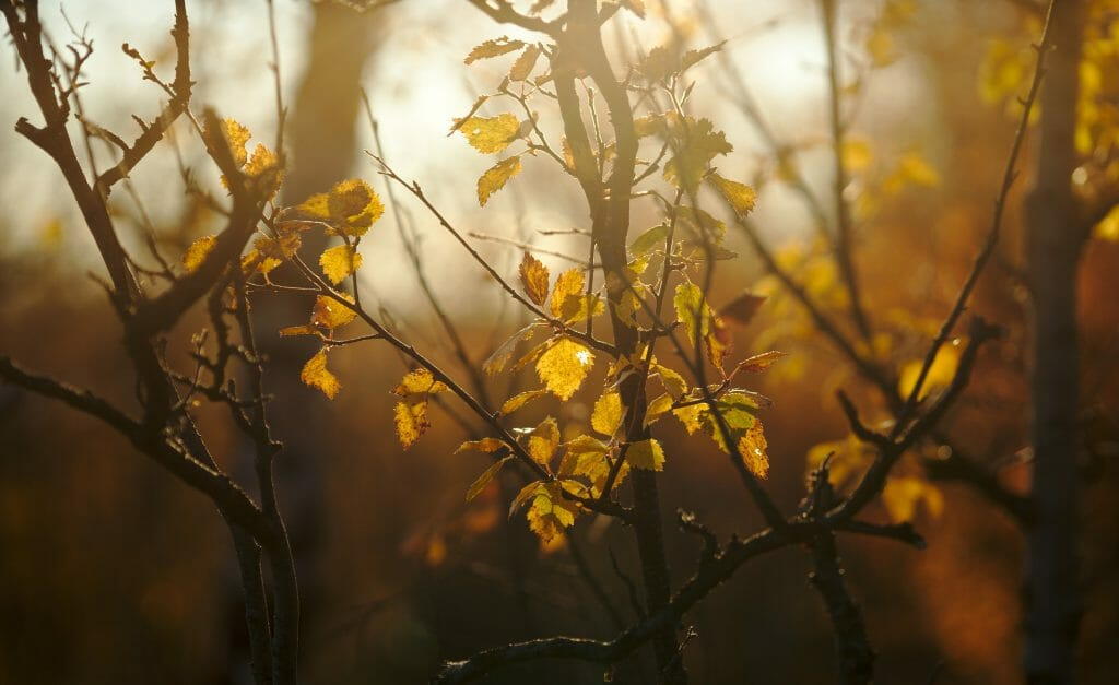 lumiere-automne-laponie