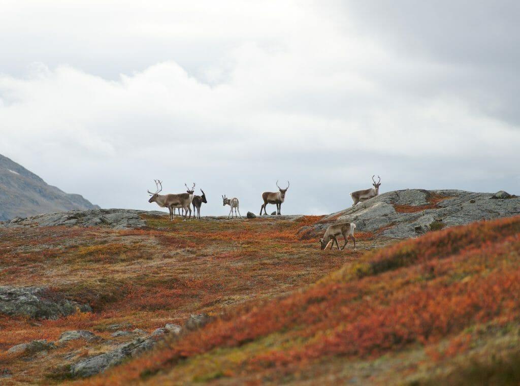 rennes-laponie
