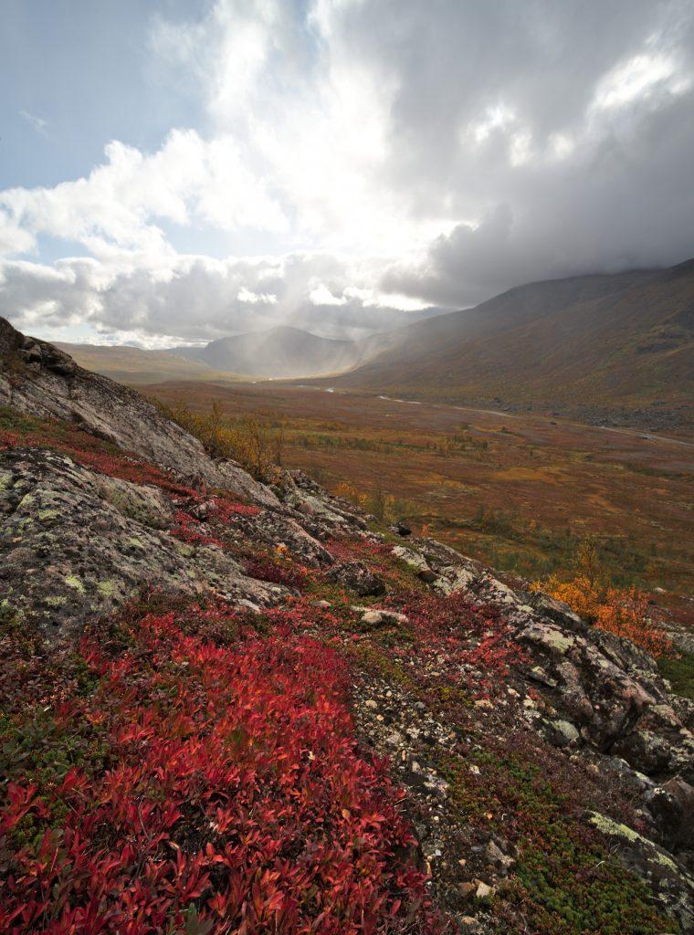 couleur d'automne en laponie