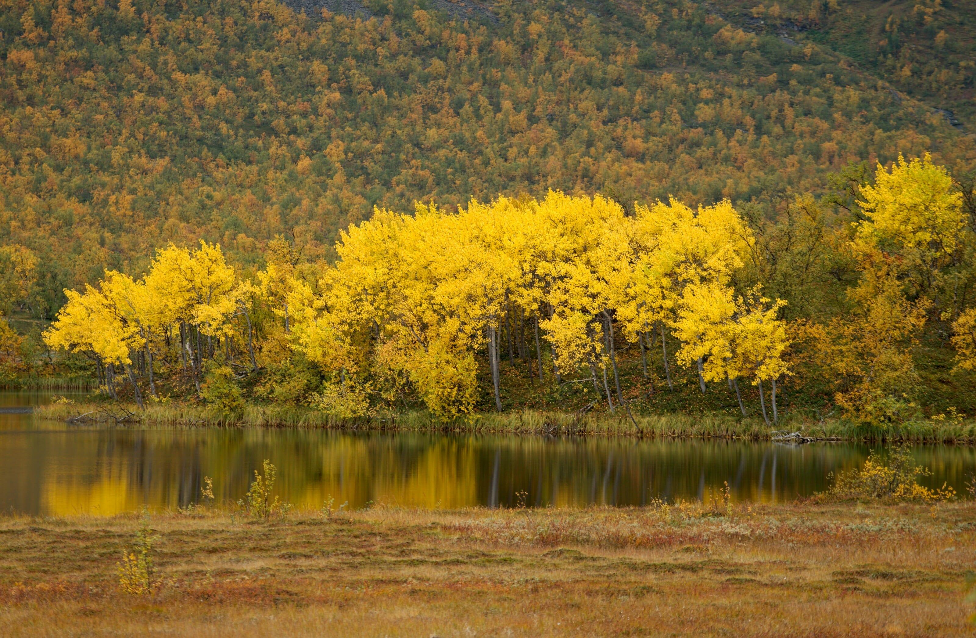 les couleurs d'automne en laponie