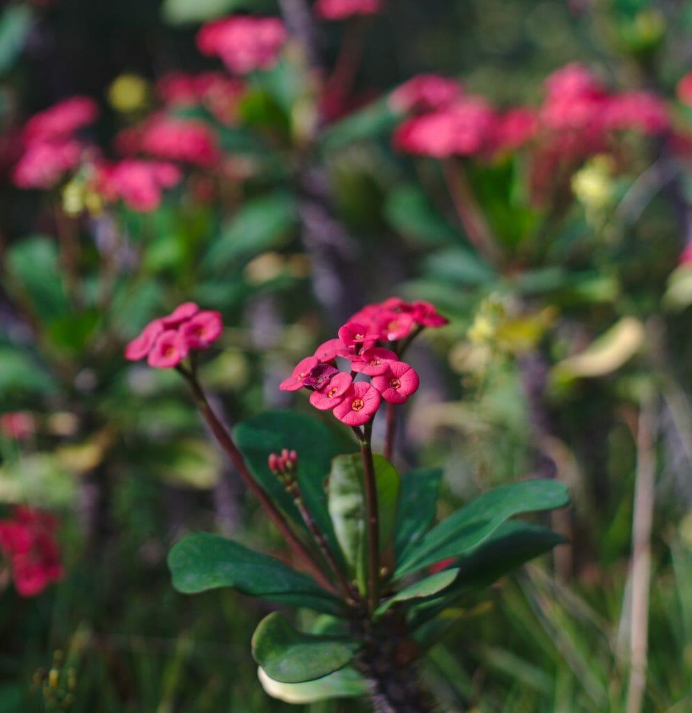 fleur au jardin botanique