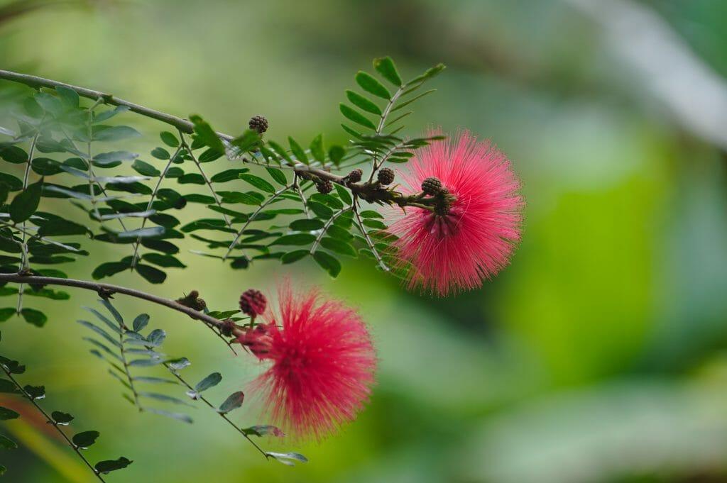 jardin botanique de tenerife
