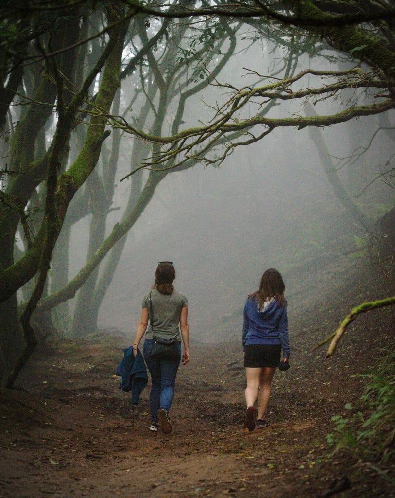 brouillard dans la forêt