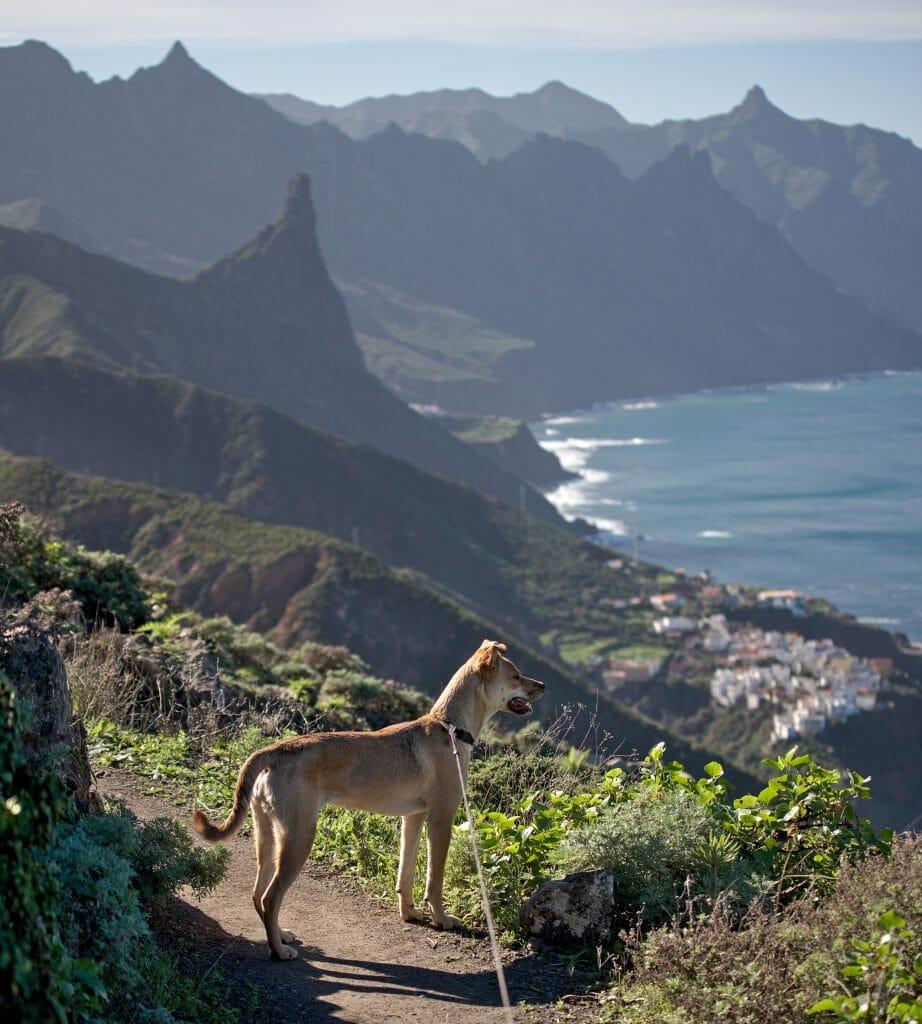 randonnée avec un chien à tenerife