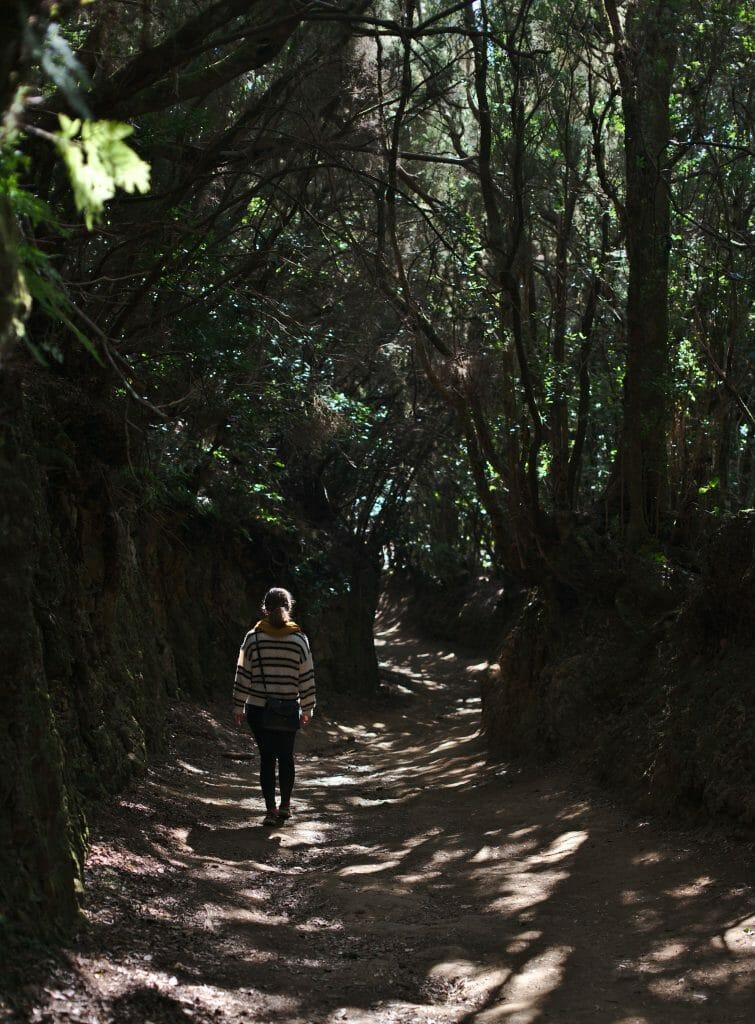 forêt dans l'anaga