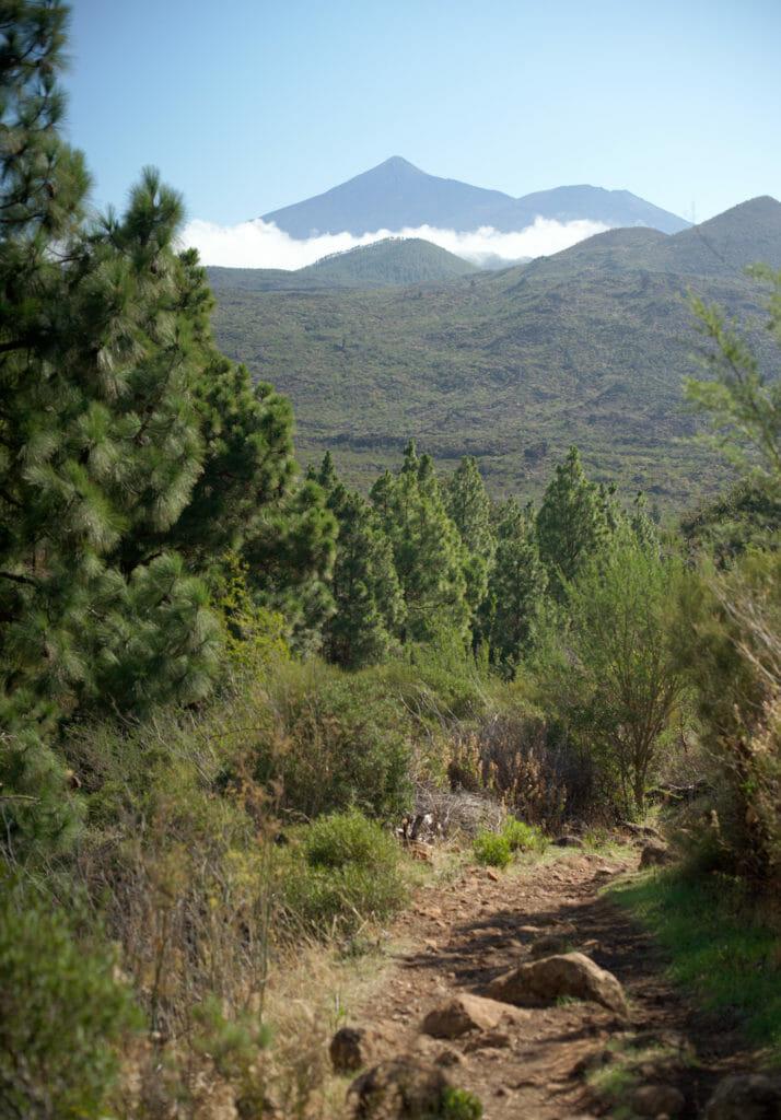 vue sur le Teide en montant au Risco Verde