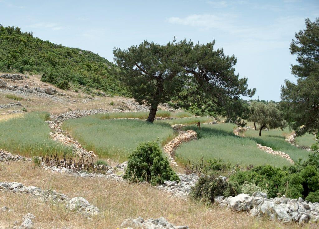culture terrasse turquie