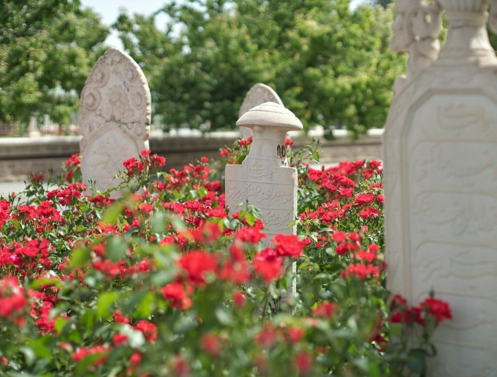 fleurs rouges turquie