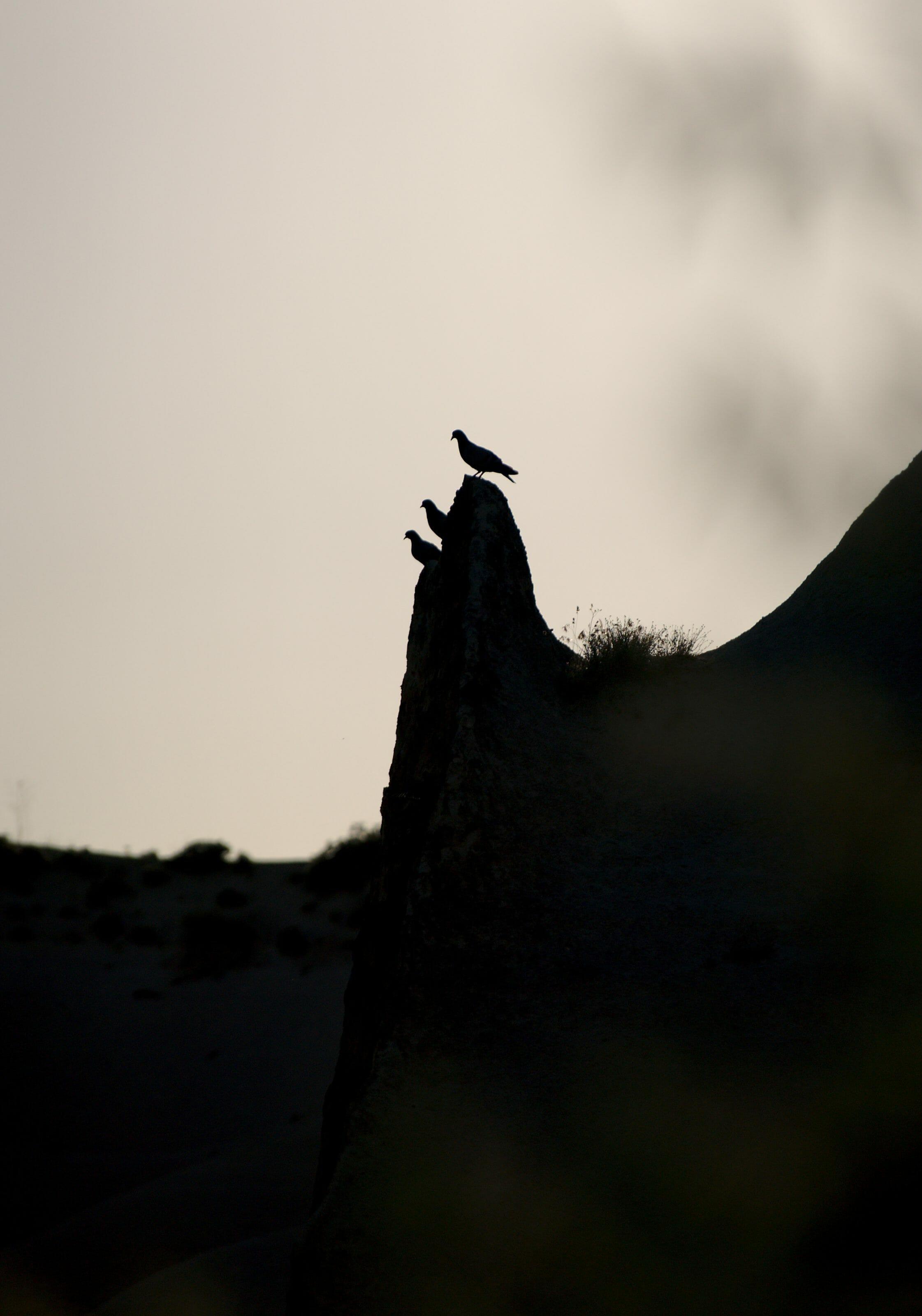 pigeon cappadoce