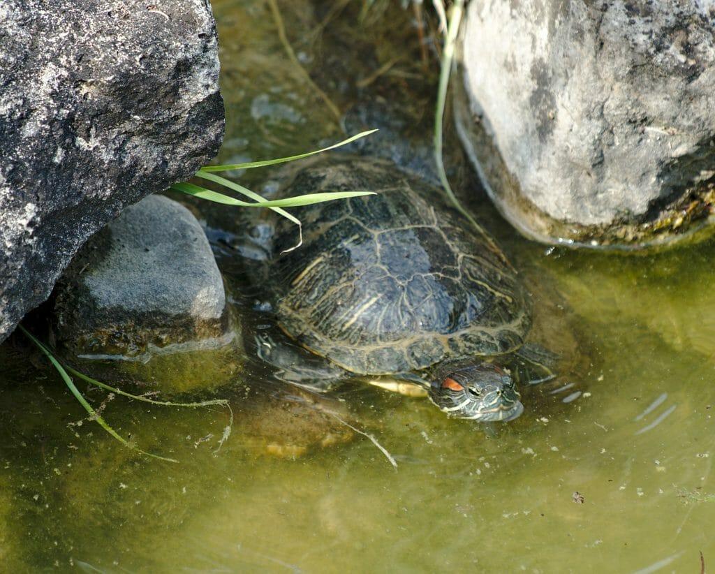 tortue jardin botanique
