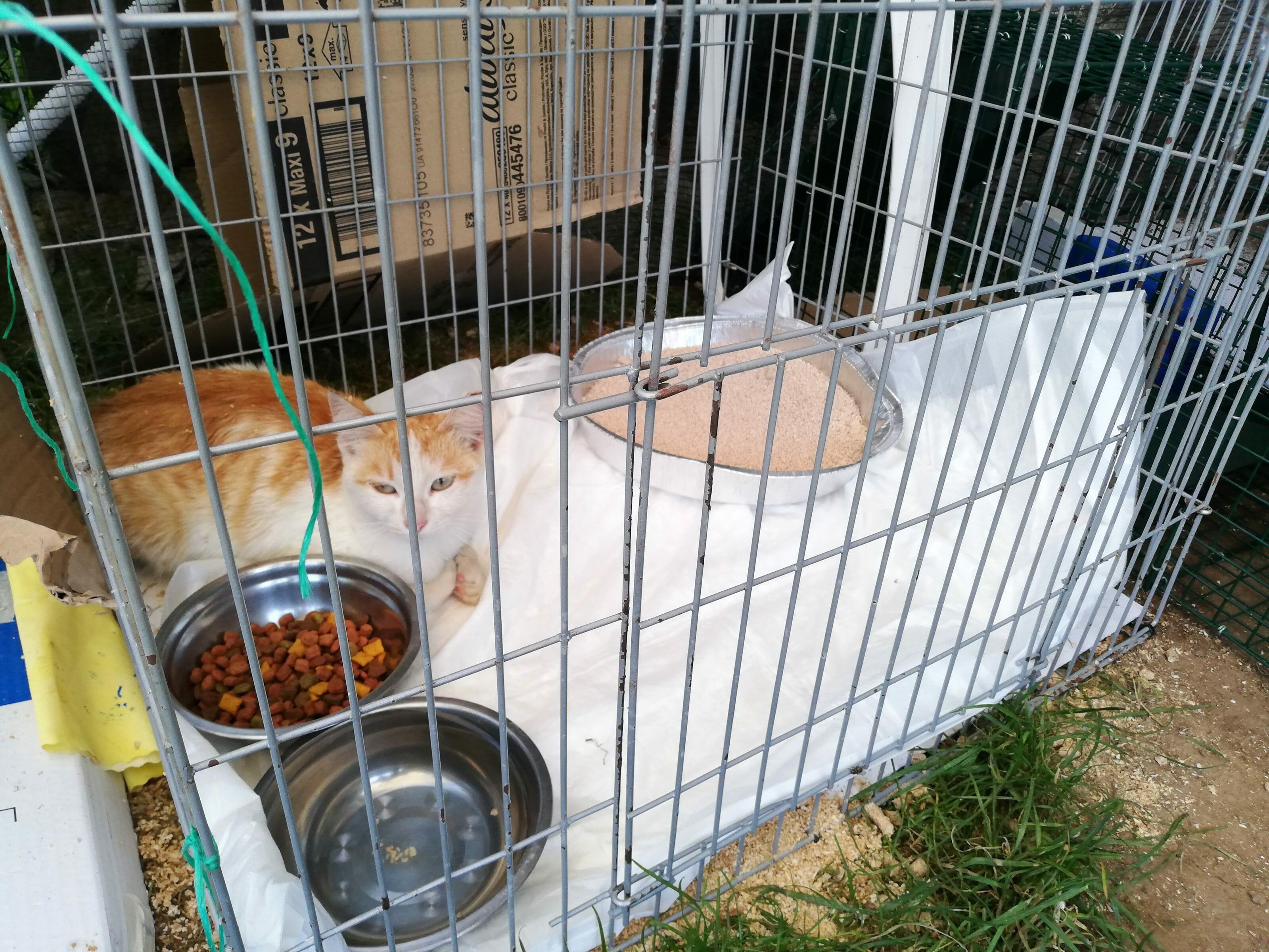cat neutering project in Bansko