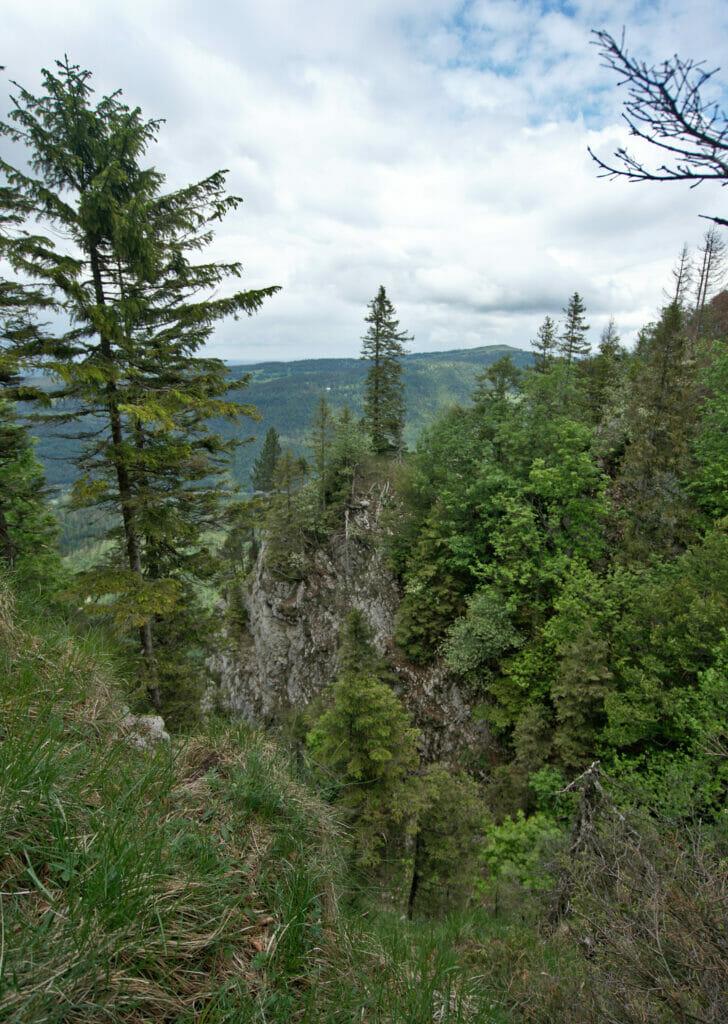 la forêt au dessus de vallorbe