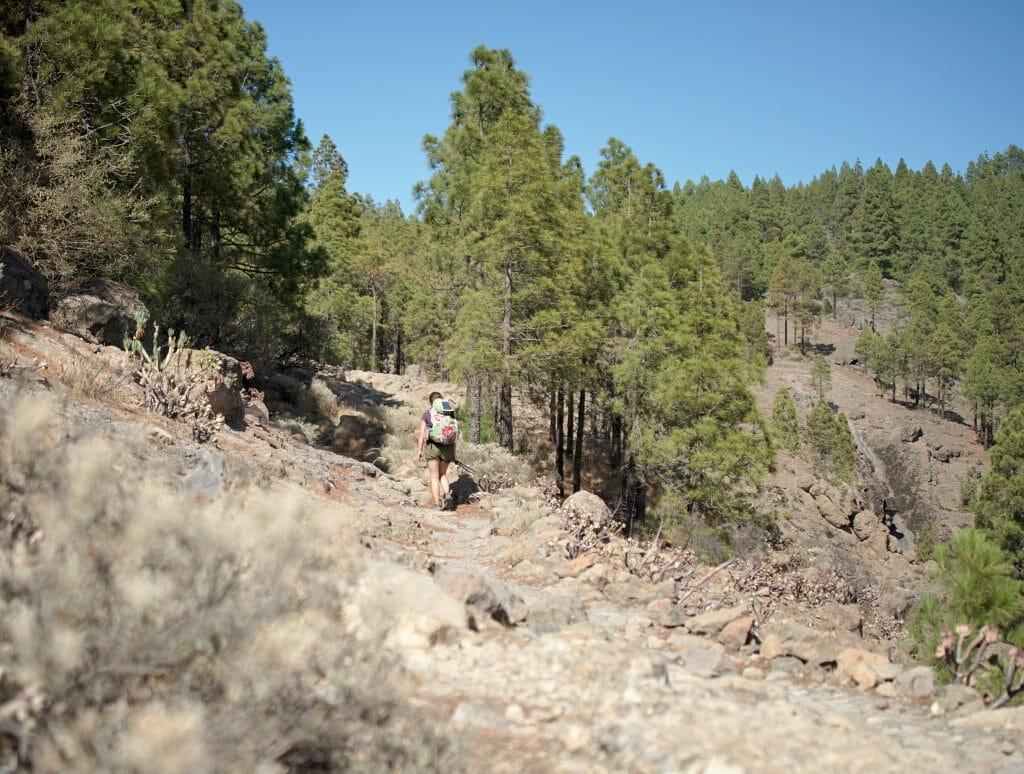 randonnée dans les pins