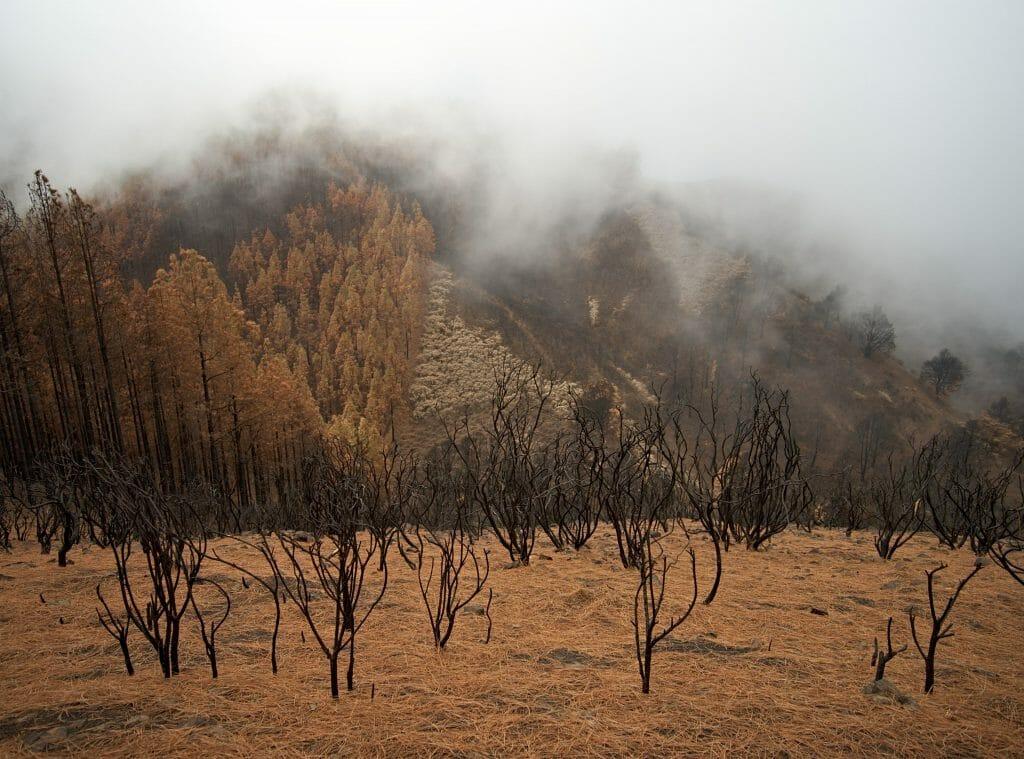 arbres brules