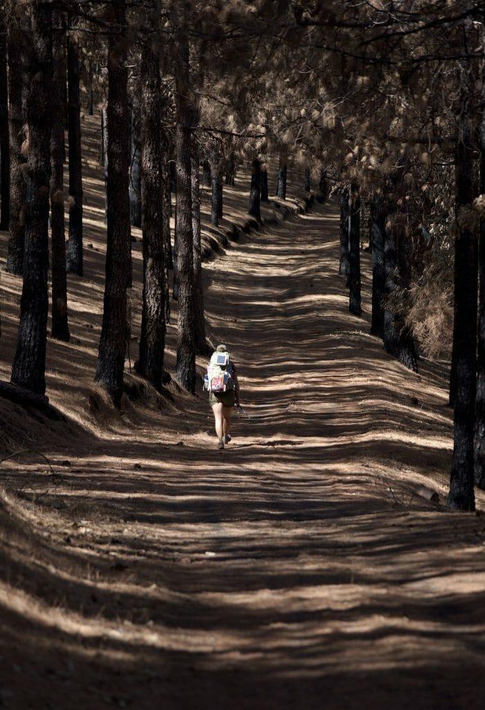 randonnée pins brulés