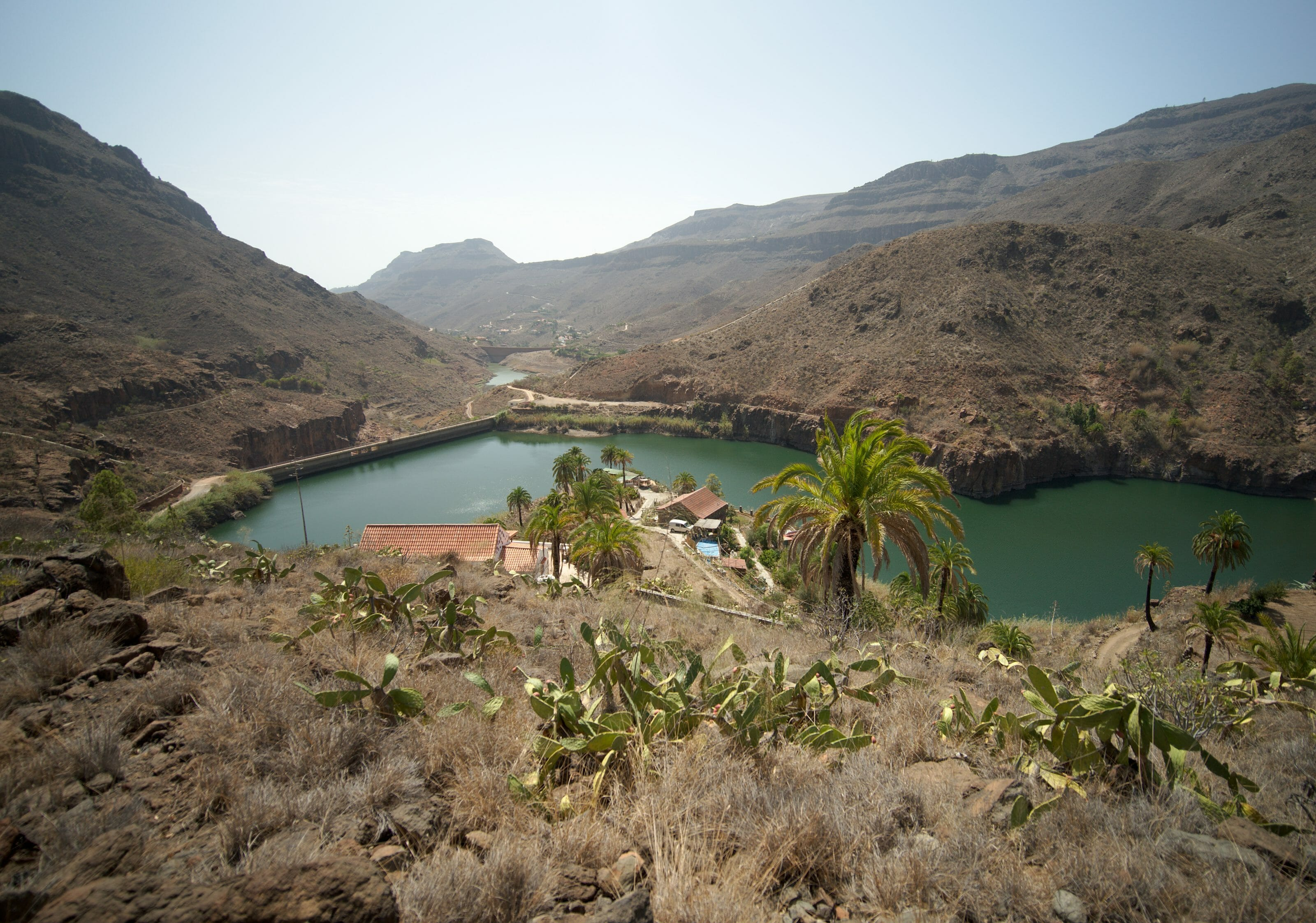 oasis in the canarias