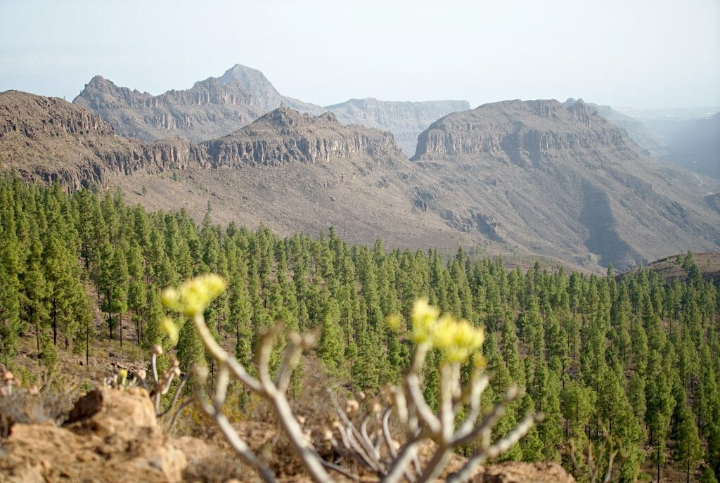 paysages canaries