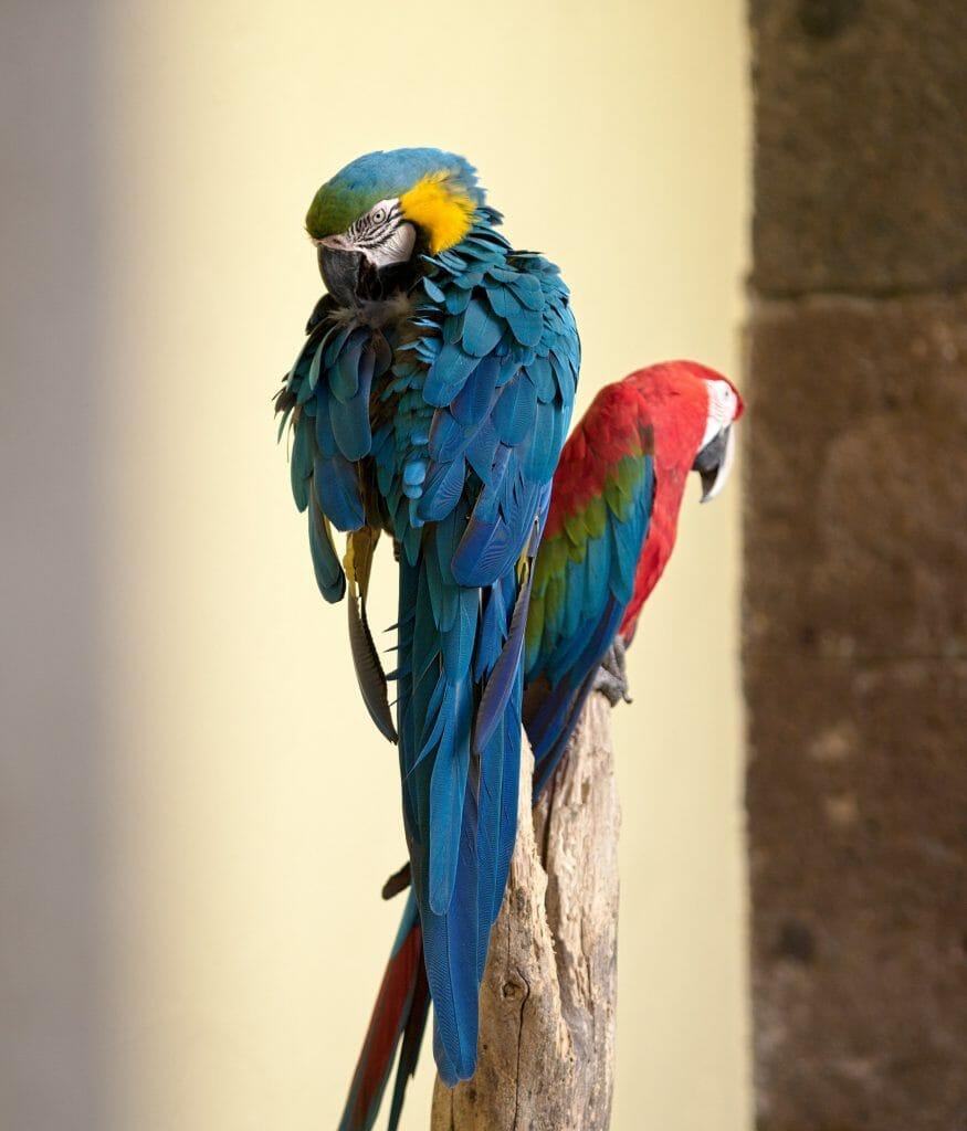 perroquets maison de colomb