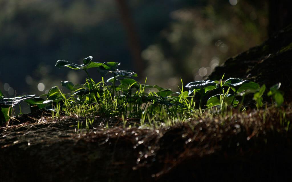 nature, photo macro
