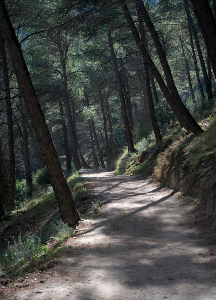 chemin de forêt, espagne