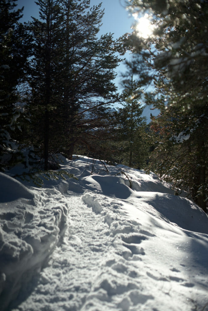rando en raquettes à travers la forêt