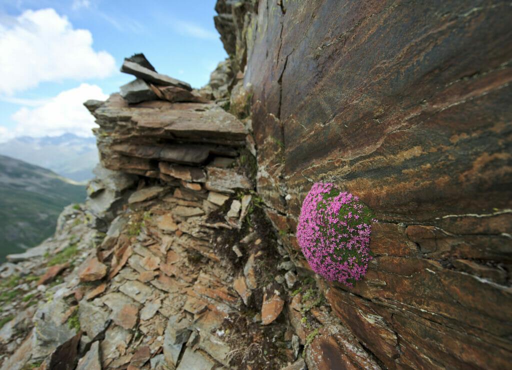 fleurs dans la roche