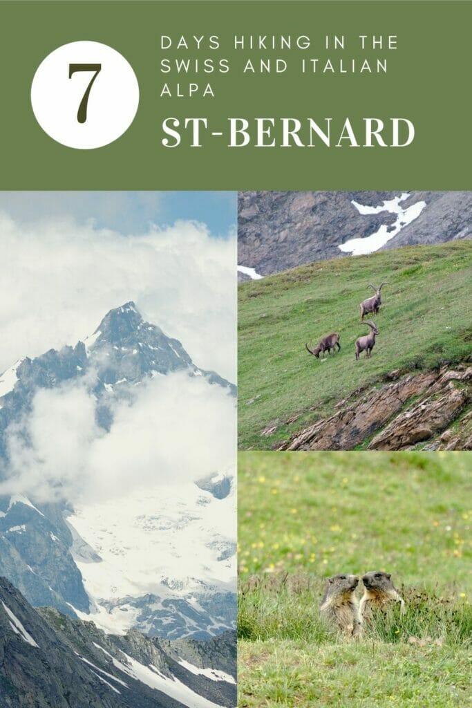 hike-st-bernard