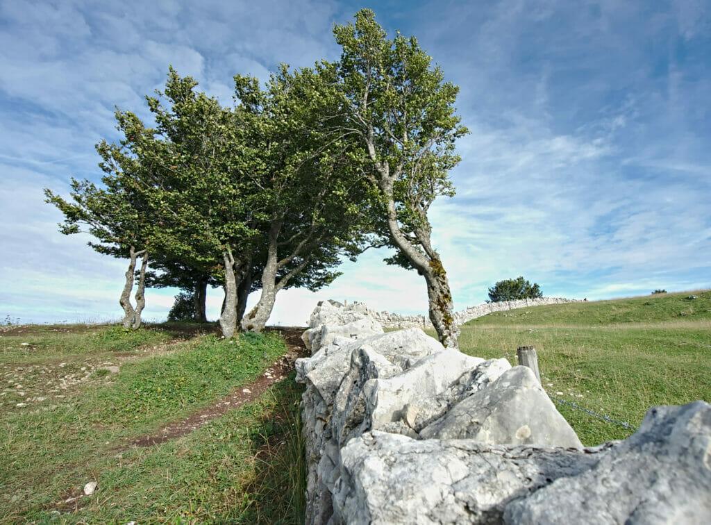 mur en pierres sèches creux du Van