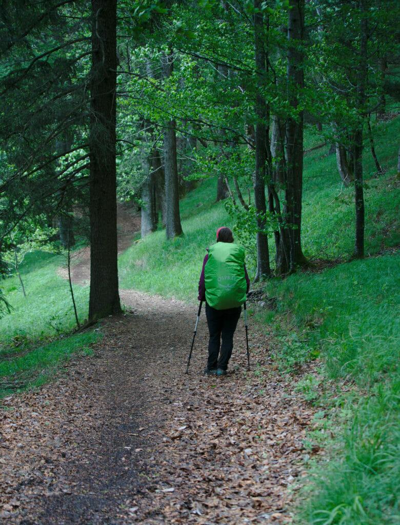 les forêts du Jura