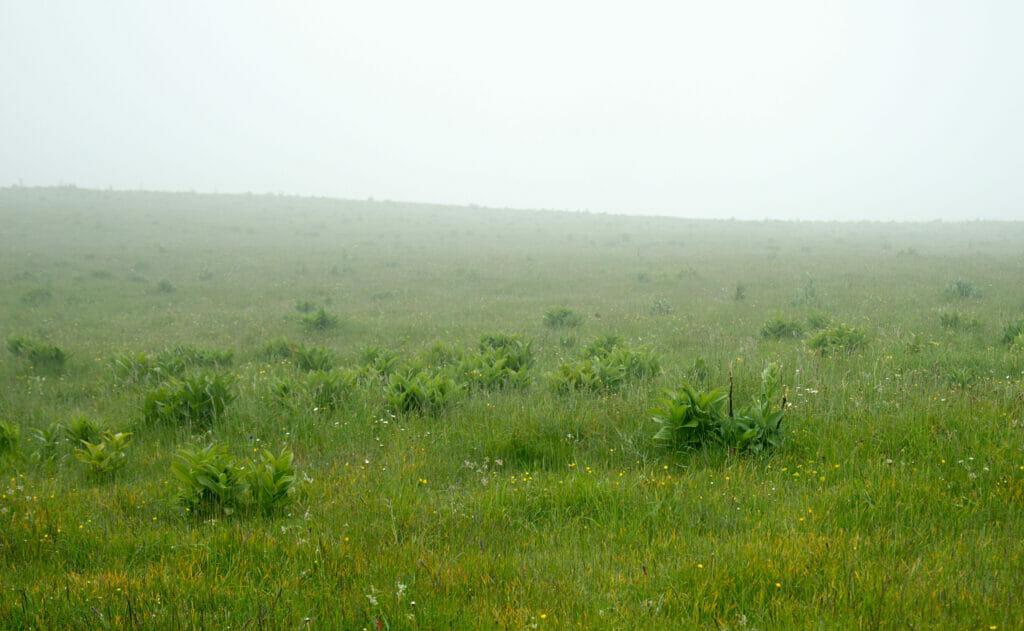 prairie du Jura