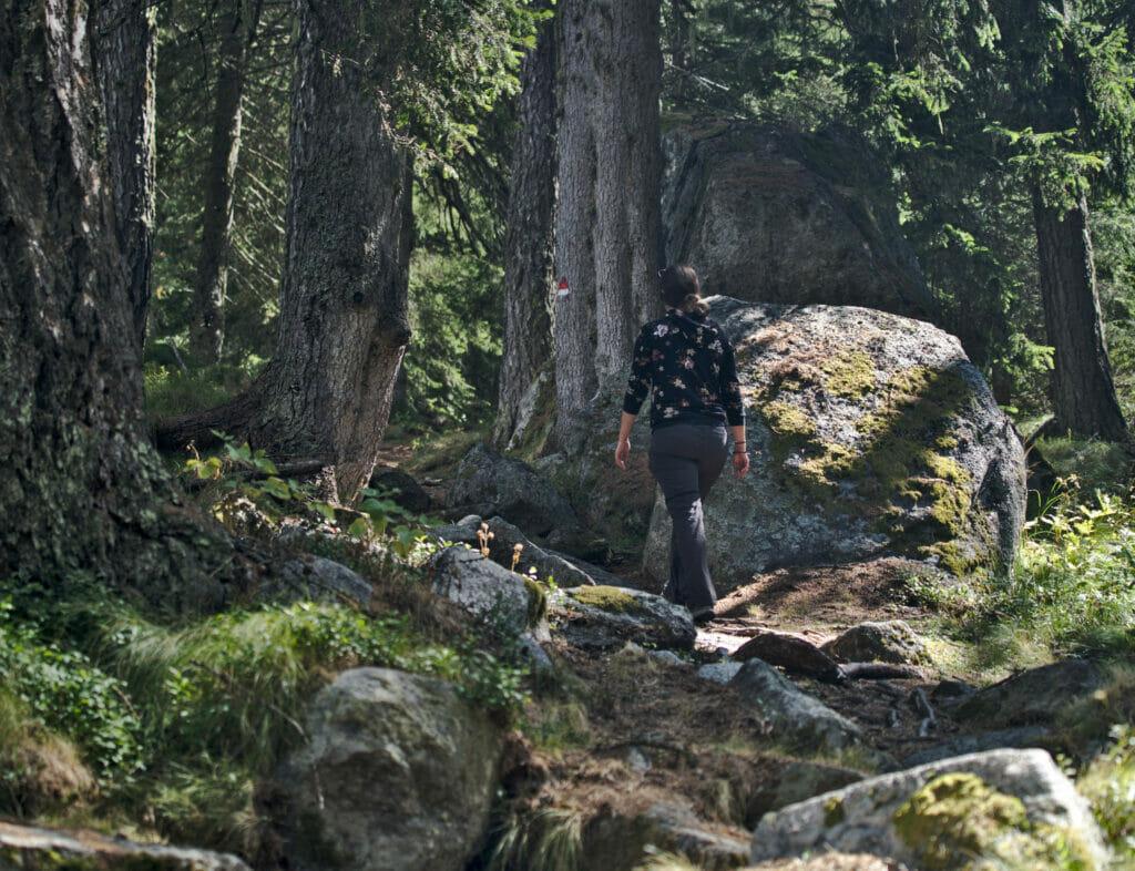 forêt en italie
