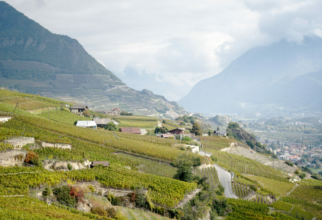 vineyards in Valais