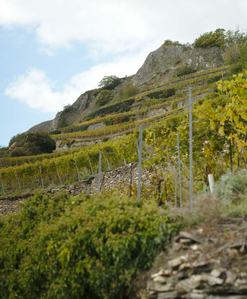 vignes en terrasse valais