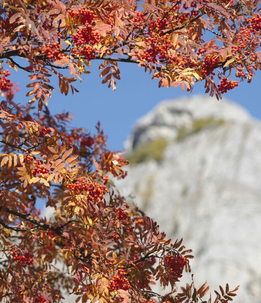l'automne à Derborence