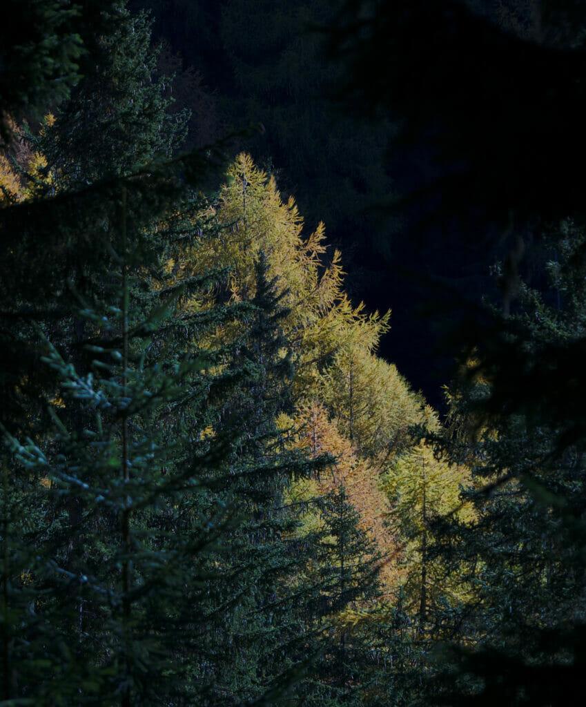 lumière dans la forêt