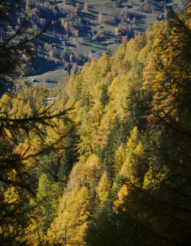 forêt nendaz