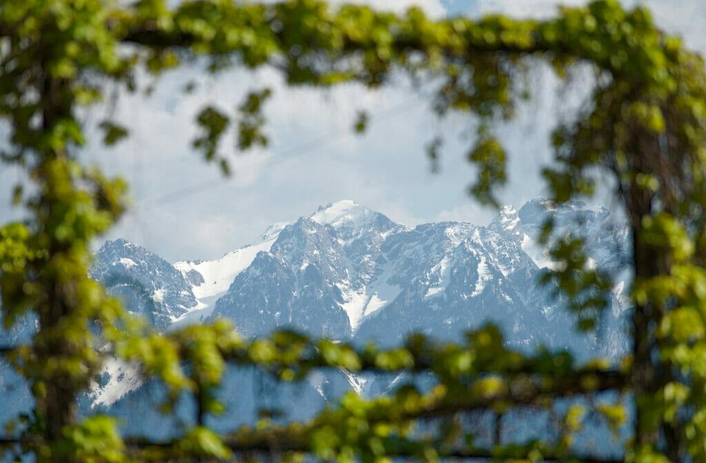 panorama alpes depuis lavaux