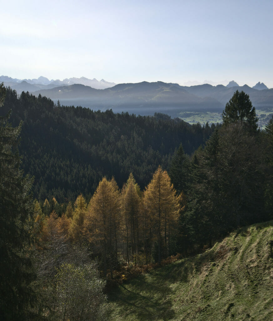 vue forêt einsiedeln