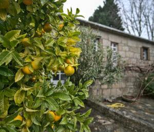 le jardin d'Anceu