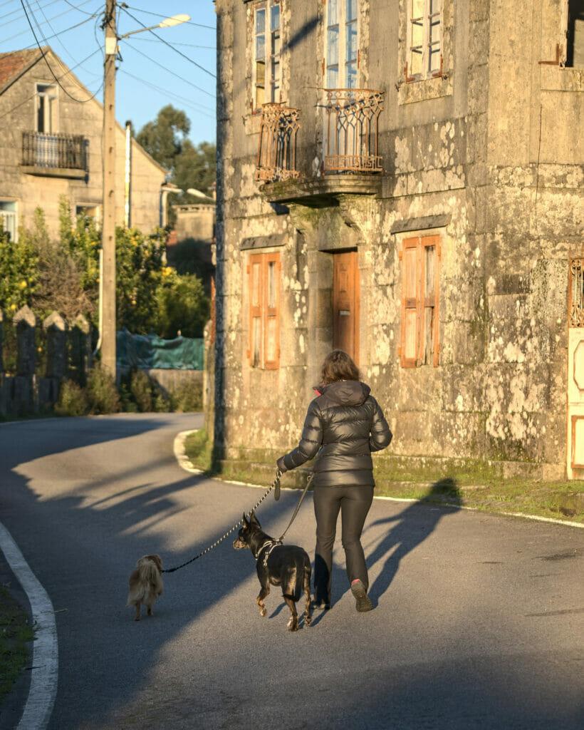 promenade des chiens à Anceu