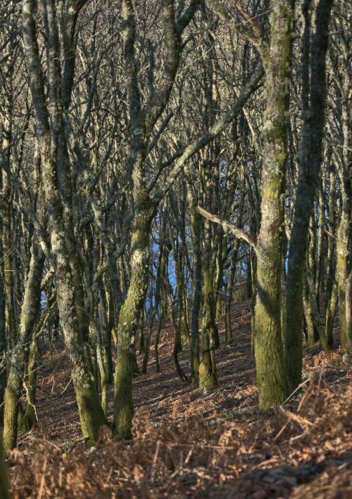 forêt autour du coliving