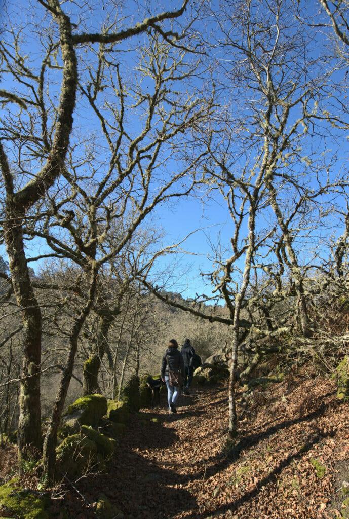 forêt en Galice