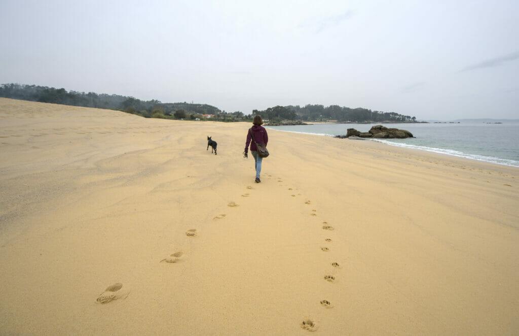 randonner sur la plage avec le chien