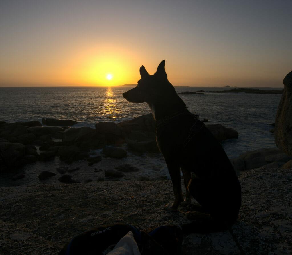 chien coucher de soleil